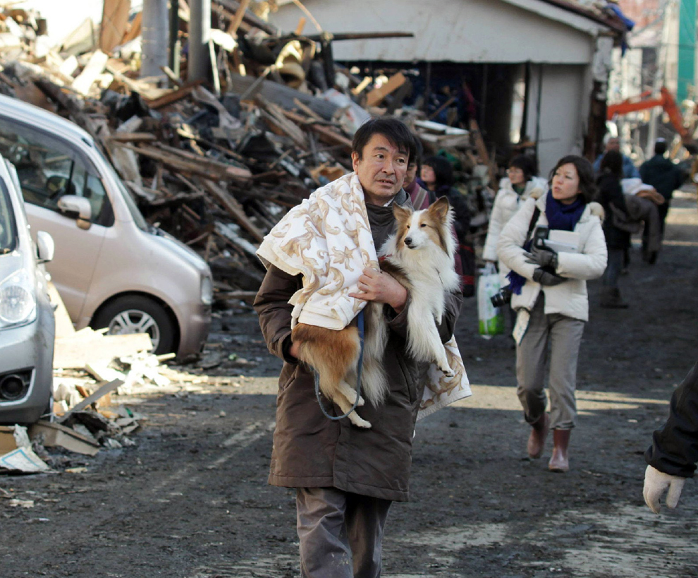 Japanese man holding a dog walking inside a town destroyed after tsunami in Japan