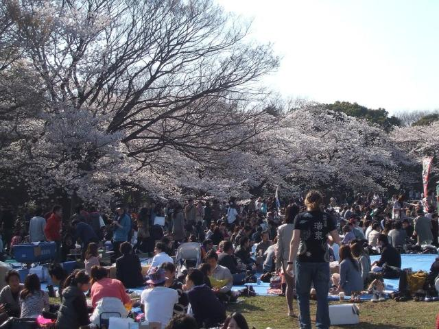 Japanese people celebrating Hanami in a park in Tokyo